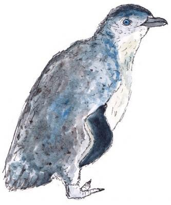 White-Flippered Penguin