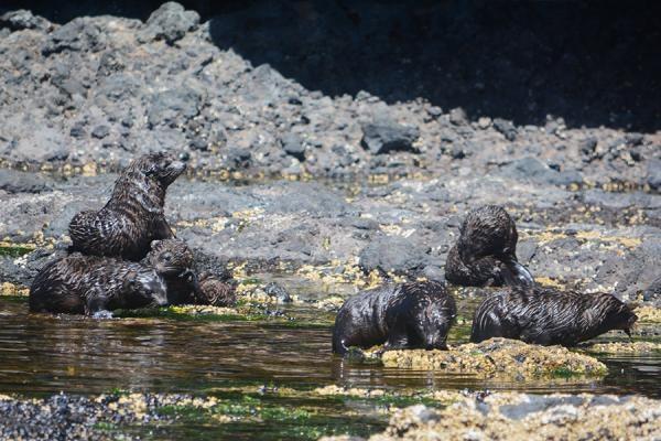 Seal pups 1