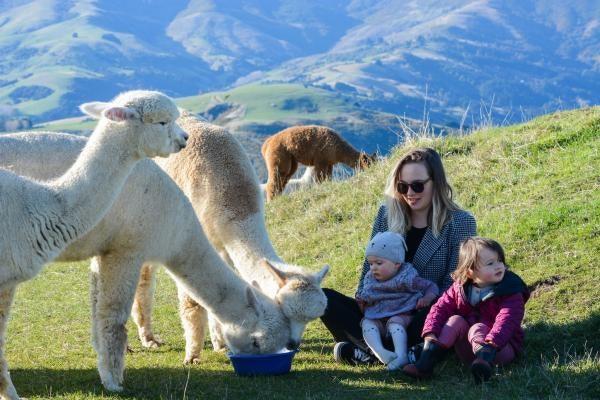 Shamara Alpaca 1